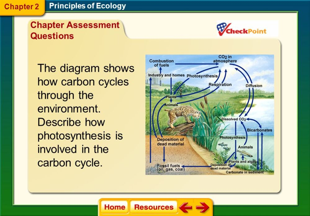 medium resolution of chapter 2 principles of ecology ppt video online download explain phosphorus cycle with schematic representation explain phosphorus cycle with diagram