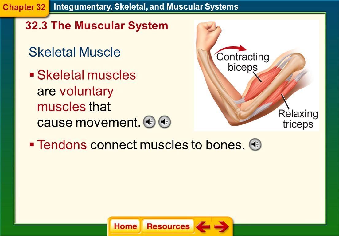 Integumentary Skeletal System Worksheet