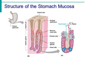 Chapter 14 – Part 2 The Digestive System  ppt video