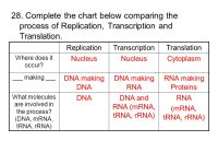 Replication Transcription Translation Worksheet Worksheets ...