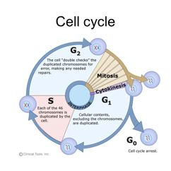 Animal Cell Diagram With Labels And Functions Vauxhall Corsa C Radio Wiring Division. - Ppt Video Online Download