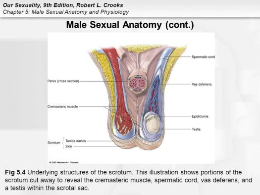 Hole S Human Anatomy And Physiology Chapter 5 Ppt – Periodic ...