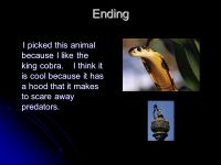 King Cobra by Nichols Szatynski. - ppt video online download