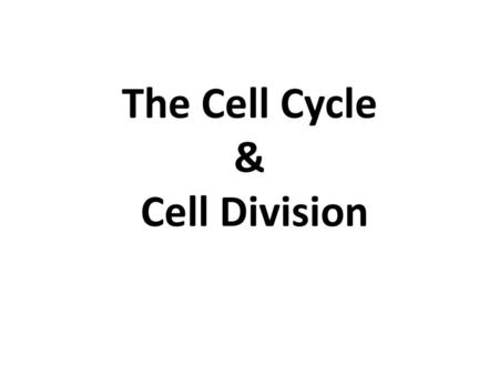(c) McGraw Hill Ryerson The Cell Cycle and Mitosis Due to