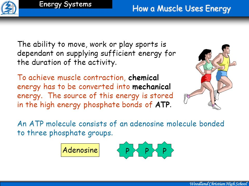 Energy For Muscular Activity  Ppt Download