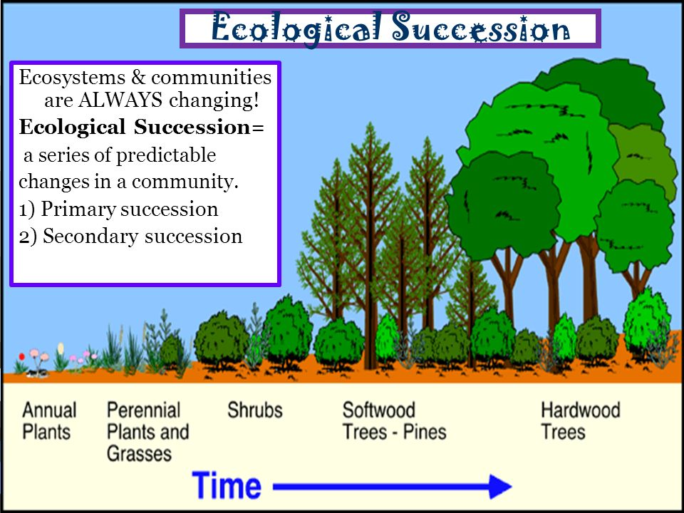 4 2 What Shapes An Ecosystem? Ppt Video Online Download