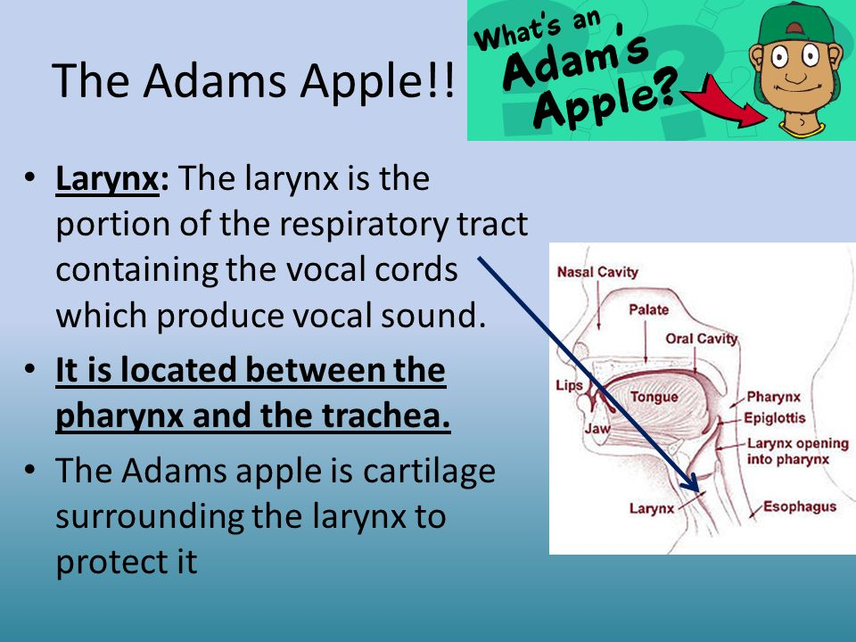 Your Located Cords Where Are Vocal