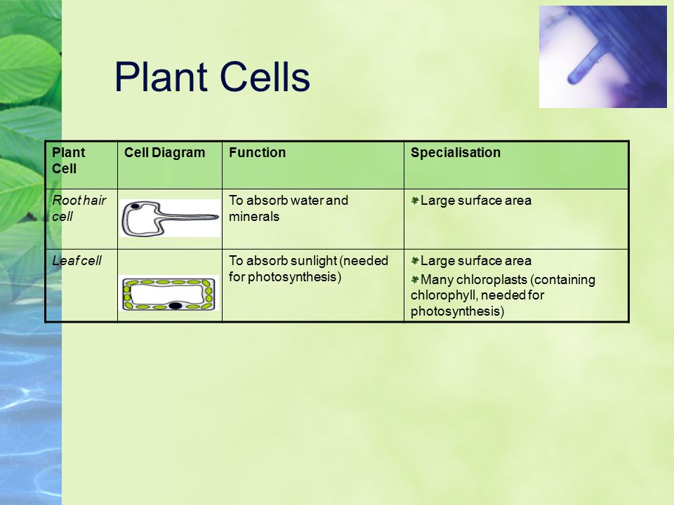 plant cell diagram with functions lawn mower ignition switch wiring adaptation to know how animal and cells are adapted for different d ...