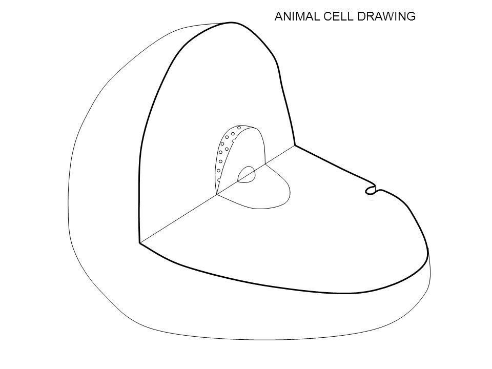 Cell Drawing Complete the structure & function table then