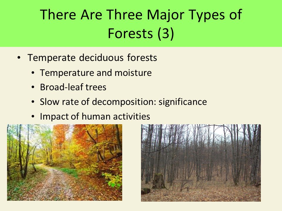 forest canopy diagram aprilia rs 125 wiring 2008 do now: based on the cartoon below, what is happening to worlds climate and why? - ppt video ...