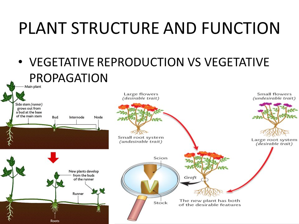 plant cell diagram with functions 1997 ford explorer wiring structure and function (the last chapter!!) - ppt video online download