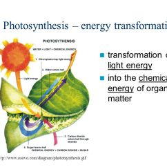 Energy Transformation Diagram Yamaha Banshee Wiring Productivity Photosynthesis & Respiration - Ppt Video Online Download