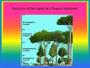 Rainforests Jayden Nguyen  ppt video online download
