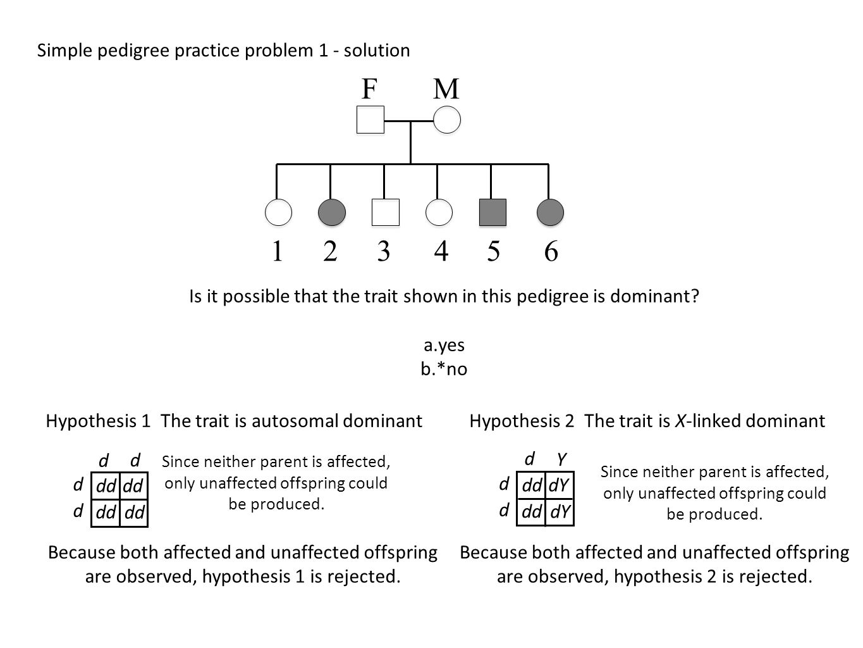 simple pedigree diagram 2001 yamaha raptor 660 wiring pictures practice problems worksheet mindgearlabs