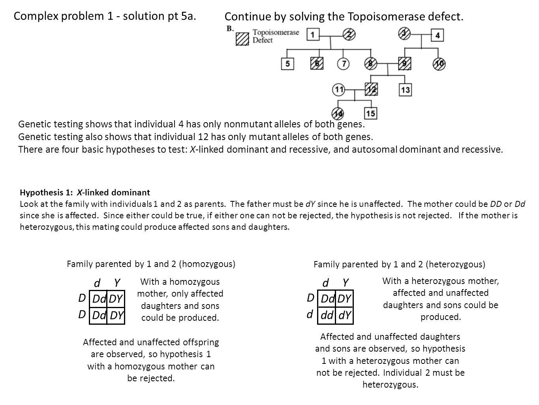 Pedigreeysis Through Genetic Hypothesis Testing