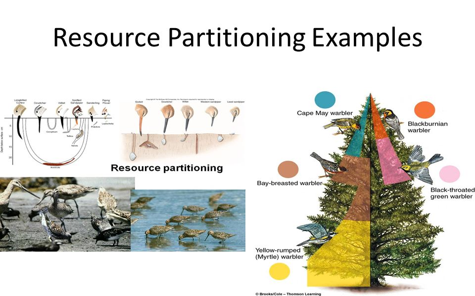 Ch 6 – Population Ecology Ppt Video Online Download