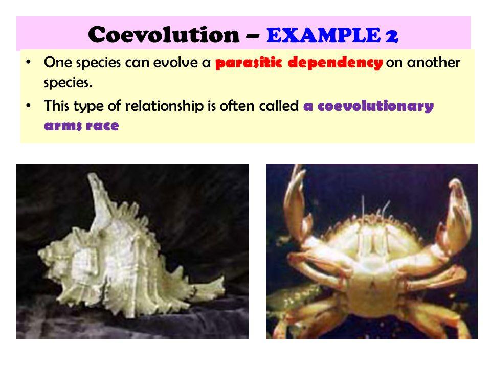 15 3 Mechanisms Of EVOLUTION Ppt Video Online Download