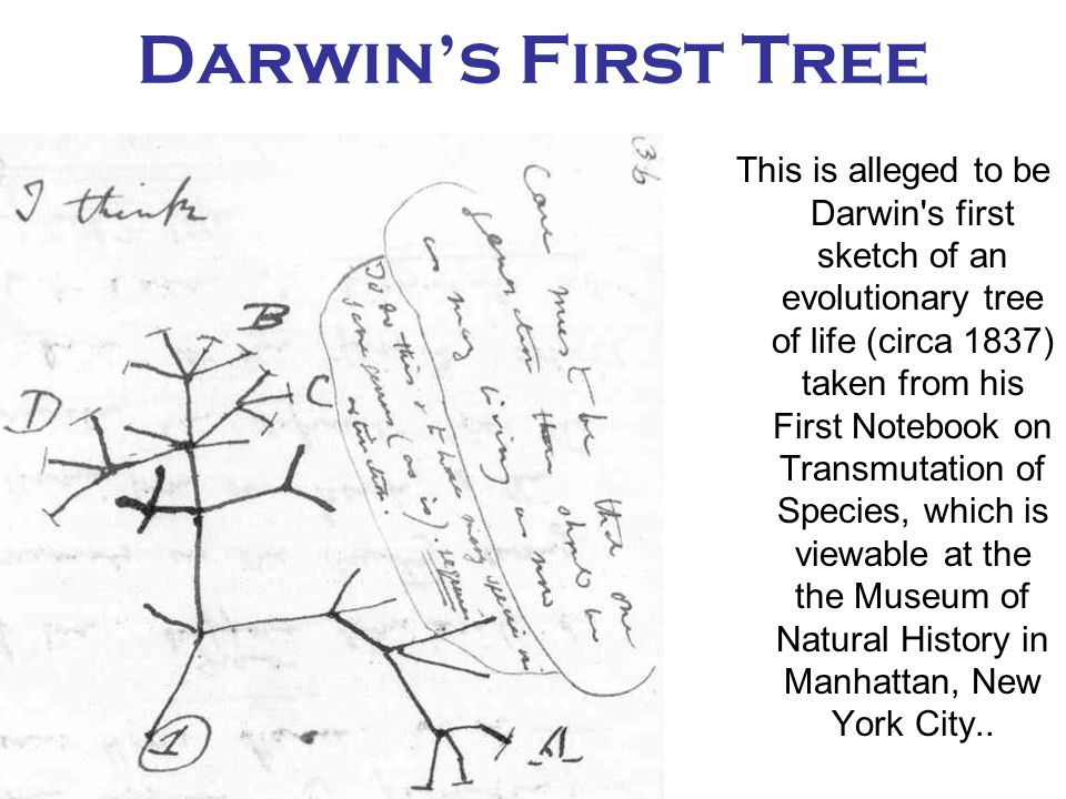 Modern Systematics Phylogenetics Phylogenetic tree