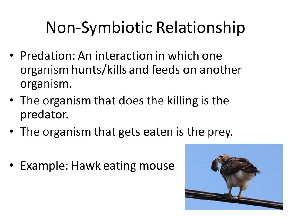 Ecology Notes For Sept 28 Through Oct Ppt Video Online