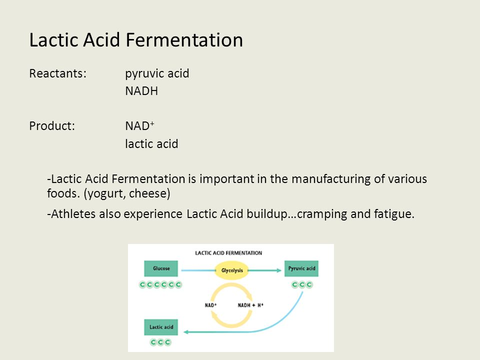 Acid And Lactic Alcohol Fermentation And Products Reactants