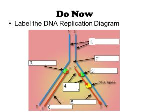 DNA Replication!  ppt video online download