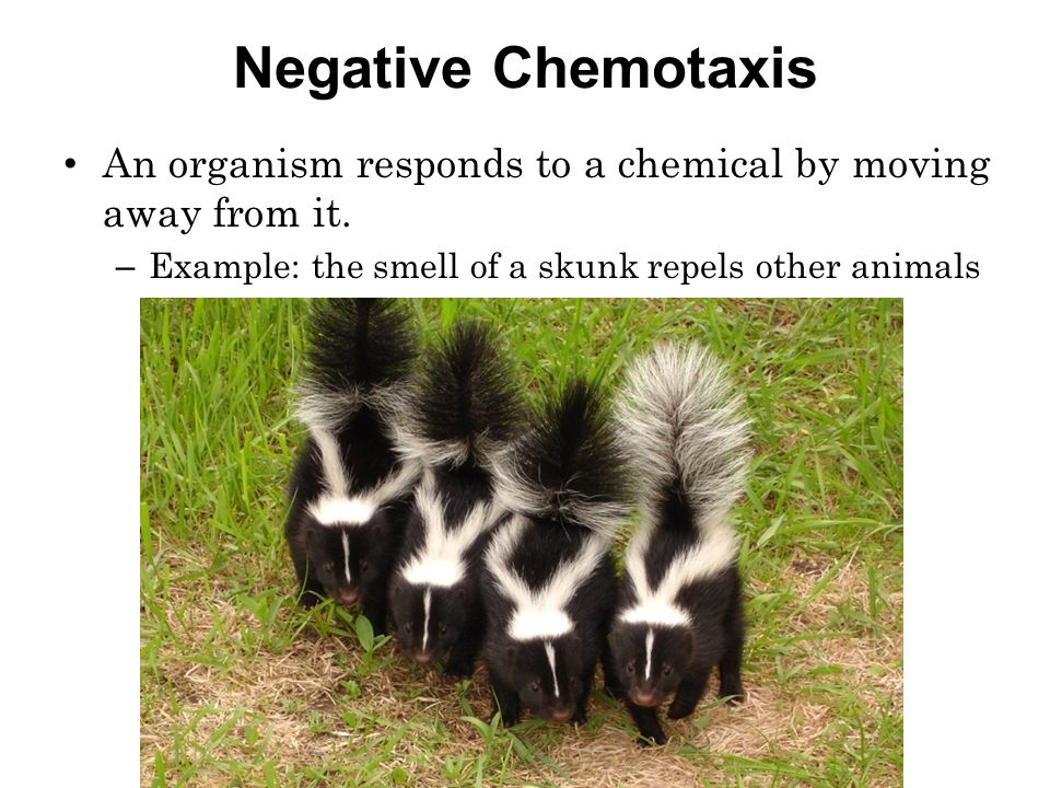 Behave Yourself! A Summary Of Animal Behaviors Ppt Video