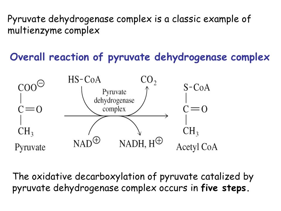 Oxidative Decarboxylation Of Pyruvate And Krebs Cycle