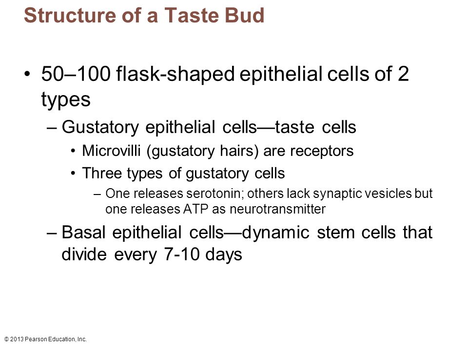 Structure And Location Taste Buds