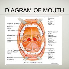 Swallowing Food Diagram Calamp Gps Wiring Digestion Ppt Video Online Download