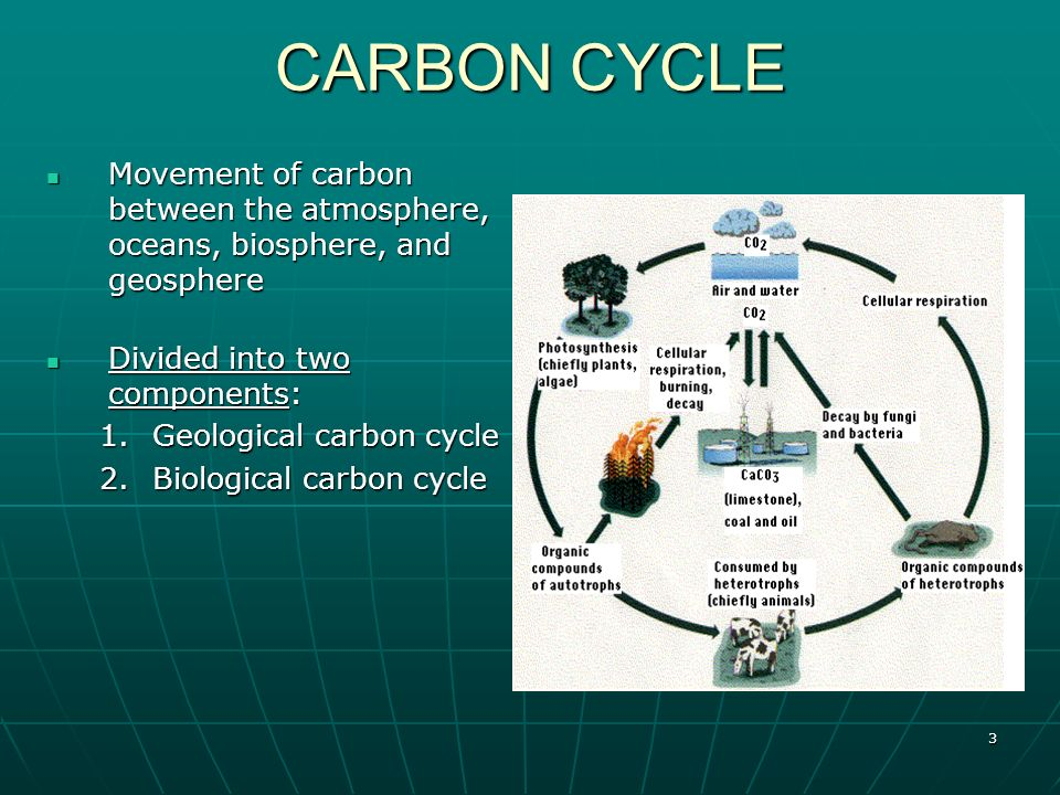 photosynthesis and cellular respiration cycle diagram ruud electric water heater wiring the carbon global warming - ppt video online download