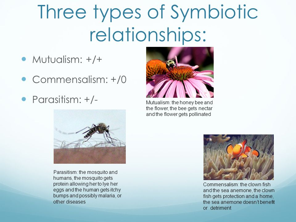 3 Types Symbiotic Relationships Examples