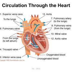 Fetal Pig Diagram With Labels Kohler Ignition Review: Labeled Heart - Ppt Video Online Download