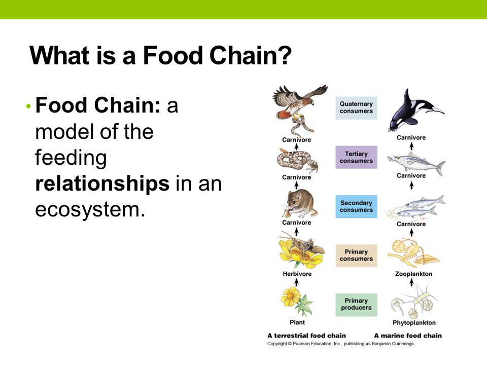 Interactions Of Life Chapter Ppt Video Online Download