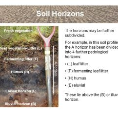 Horizon Diagram Soil Formation Simple Auto Wiring An Introduction To Soils And Terminology Ppt Download
