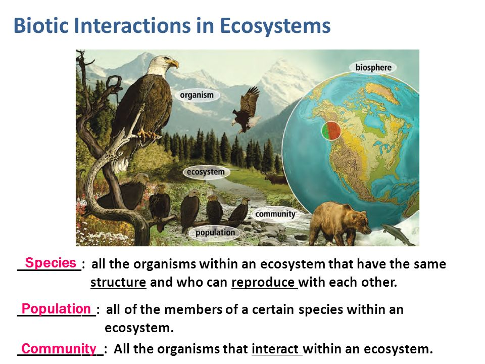 Ecology Ecology The Study Of How Organisms Interact With