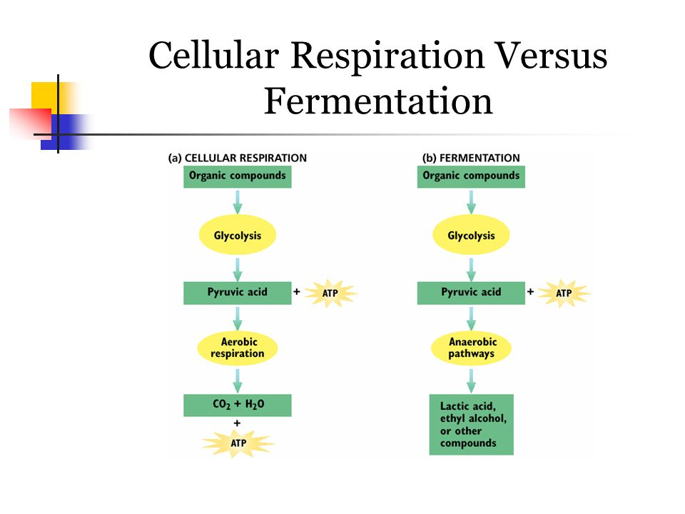 diagram of the atp molecule vauxhall vectra radio wiring chapter 7: cellular respiration - ppt video online download