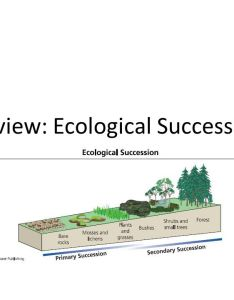 Use the venn diagram to compare two types of ecological succession worksheet homeschooldressage com also rh selo  ink