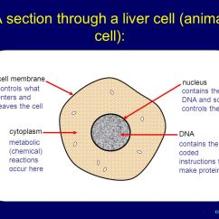 Diagram Of A Section Cell Membrane Fender Blacktop Jazzmaster Wiring Cambridge Igcse Biology Extended Level - Ppt Video Online Download