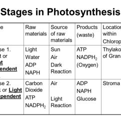 Forest Canopy Diagram Safety Switch Wiring (photosynthesis And Respiration) - Ppt Video Online Download