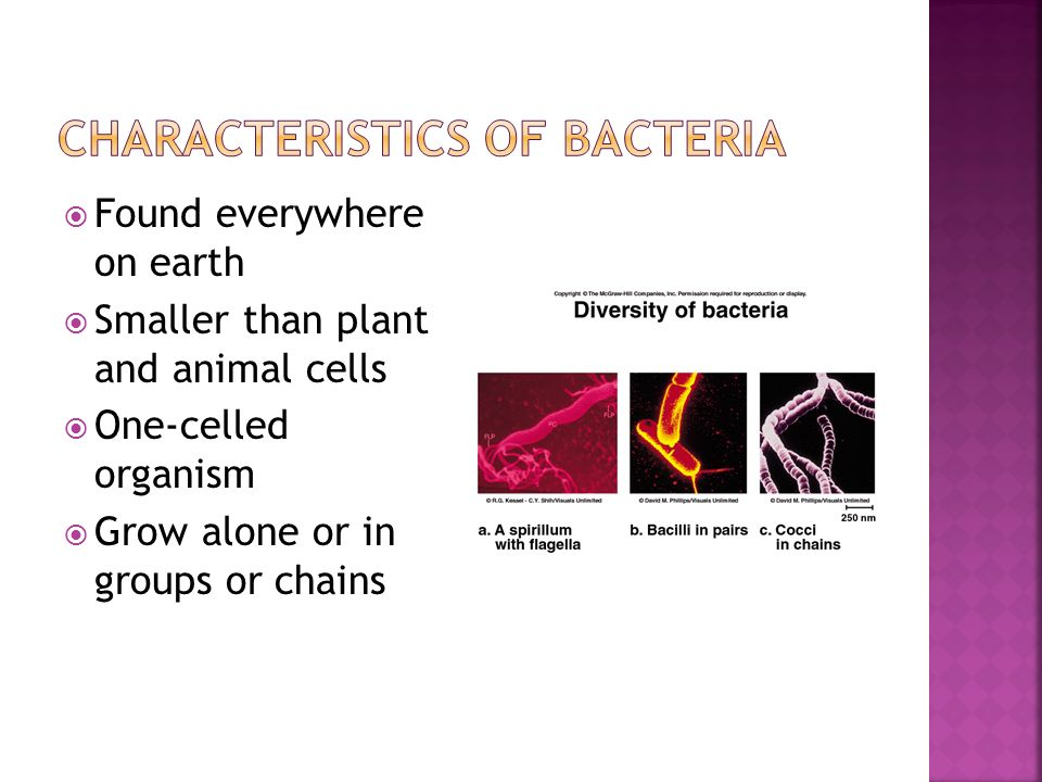 cell membrane diagram limitorque wiring diagrams mx bacteria chapter ppt download