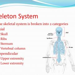 Blank Skeletal Diagram Mk Double Light Switch Wiring System Obj: I Will Correctly Label A Skeleton And Examine The Bones Of ...