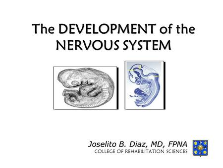 Chapter 9a The Central Nervous System. About this Chapter