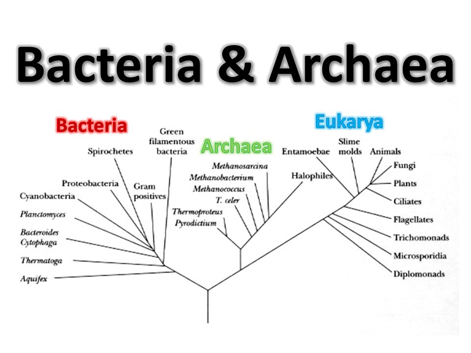 eubacteria and archaebacteria venn diagram of reptiles amphibians archaea related keywords - long tail keywordsking