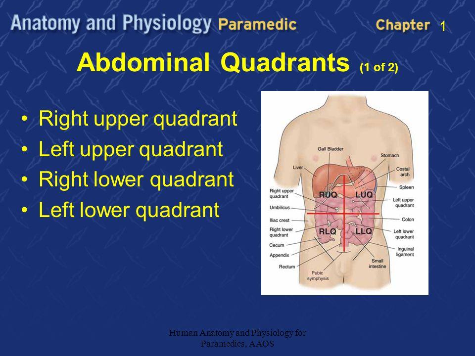 Anatomy of abdomen quadrants