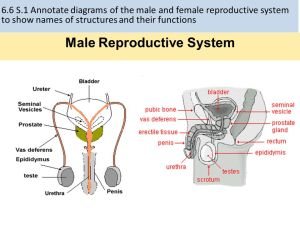 66 Hormones, Homeostasis & Reproduction  ppt video
