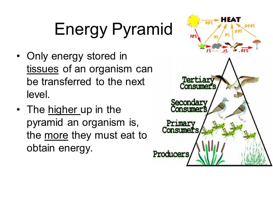 energy transfer diagram 2 circle venn maker interpreting food webs - ppt video online download
