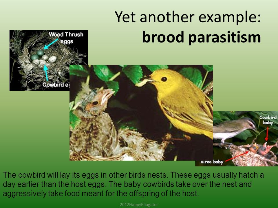 Symbiosis And Symbiotic Relationships Ppt Video Online