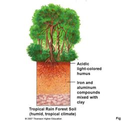 Deciduous Forest Layers Diagram 2007 Honda Civic Car Stereo Wiring Ecosystems: What Are They And How Do Work? - Ppt Download