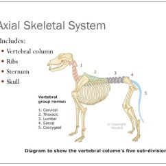 Horse Skull Diagram Valcom Paging Horn Wiring Skeletal Anatomy. - Ppt Download