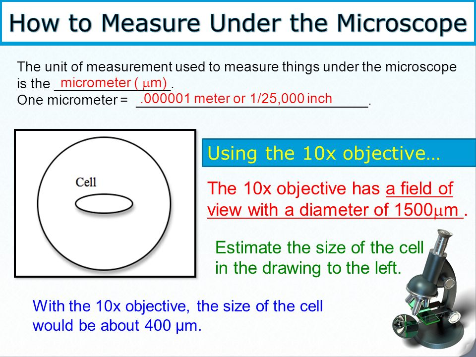 The Microscope  ppt video online download